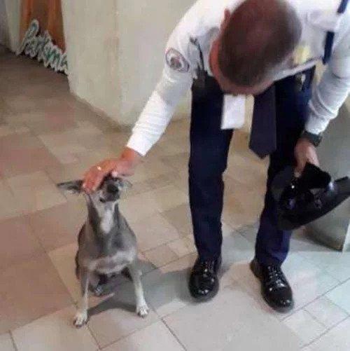 cane-agente