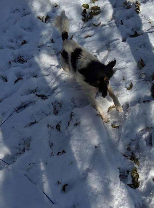Il salvataggio del povero cucciolo incatenato nella neve