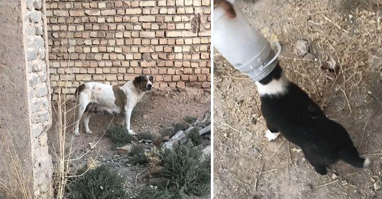 Cane randagio conduce uno sconosciuto dai suoi cuccioli per salvarli
