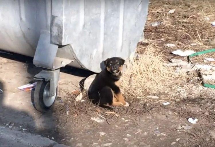 Cane abbandonato come un rifiuto tra i bidoni dell'immondizi