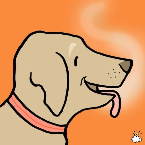 cane-saliva
