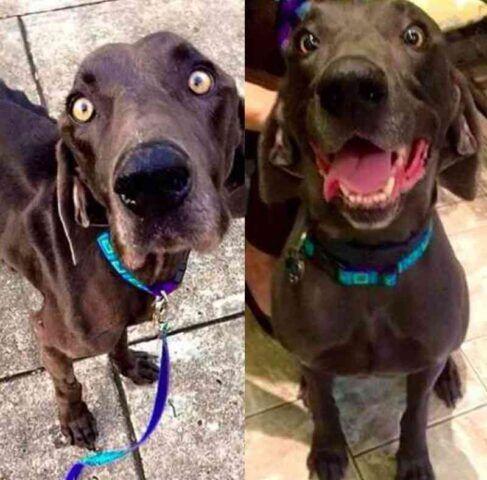 Alex il cane costretto a vivere da randagio per molto tempo