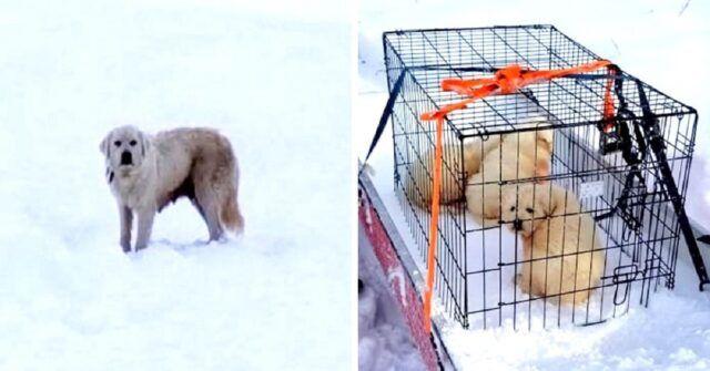 coppia-trova-tre-cuccioli-nella-gabbia-con-la-loro-mamma-affianco-che-non-aveva-la-minima-intenzione-di-lasciarli