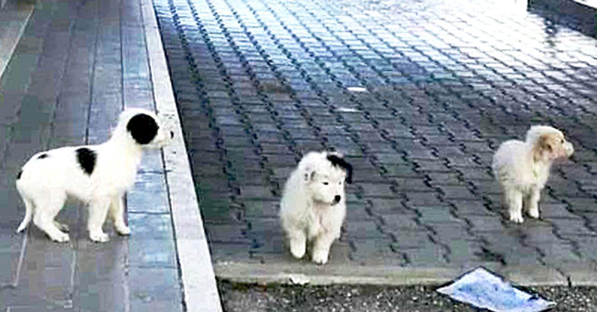 cuccioli-abbandonati