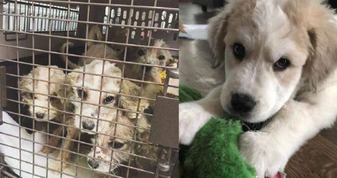 Uomo salva 6 cuccioli abbandonati in un bosco