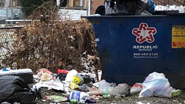 L'abbandono del povero Pitbull