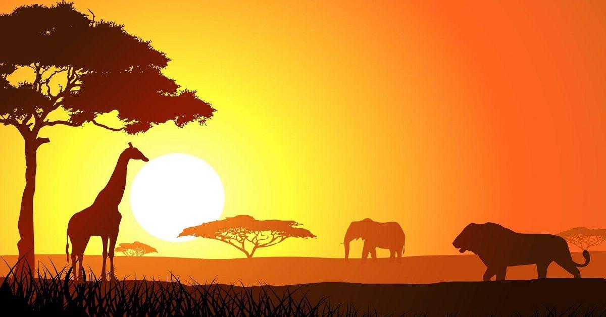 foto-animali-africa