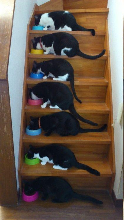gatti-mangiano-insieme