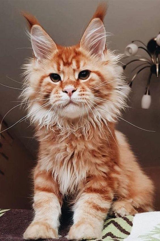 gatto-baffi