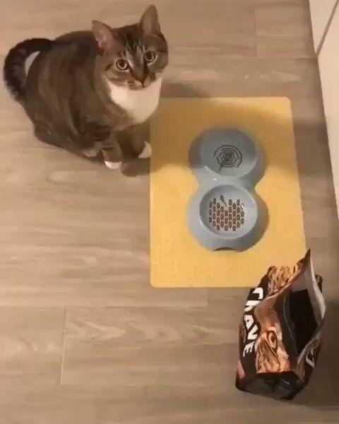 gatto-ciotola