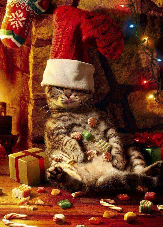 Perché i gatti miagolano anche se hanno ancora del cibo nell