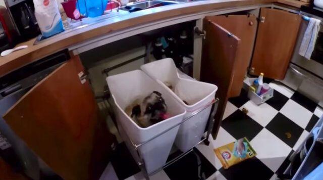 il-cagnolino-nascosto-nel-secchio-della-spazzatura 1