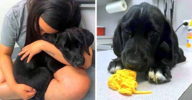 la-terribile-esperienza-di-Riley-con-il-cucciolo-che-aveva-appena-adottato