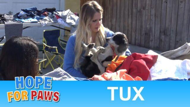 Bambini trovano Tux e gli salvano la vita