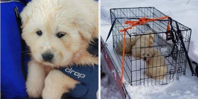 coppia-trova-tre-cuccioli-nella-gabbia-con-la-loro-mamma-affianco