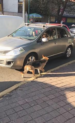 Due donne abbandonano un cane per le strade del Messico
