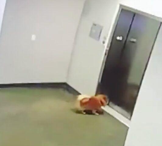 ragazzo-salva-la-vita-del-cagnolino