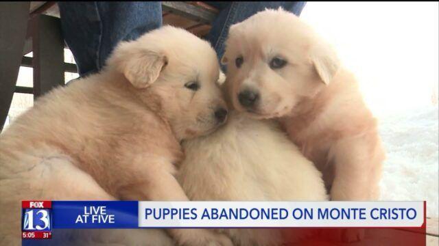coppia-trova-tre-cuccioli-nella-gabbia-con-la-loro-mamma-affianco 1