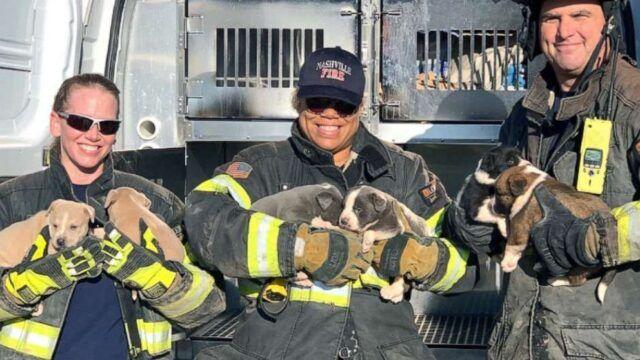 Vigili-del-Fuoco-salvano-la-vita-a-8-cuccioli 1