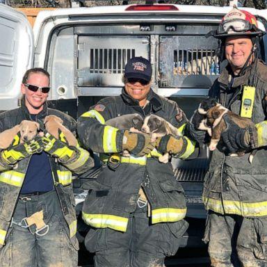 Vigili-del-Fuoco-salvano-la-vita-a-8-cuccioli 2