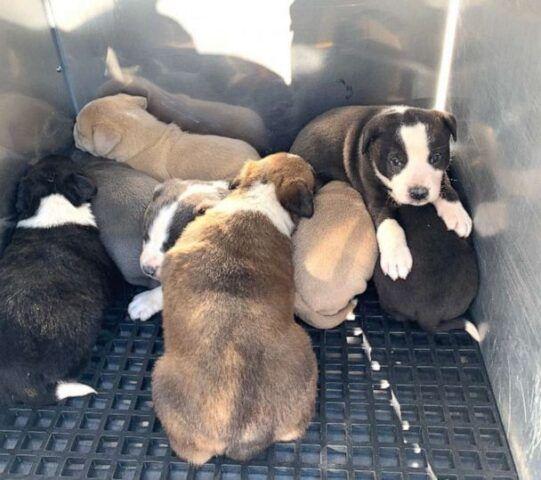 Vigili-del-Fuoco-salvano-la-vita-a-8-cuccioli