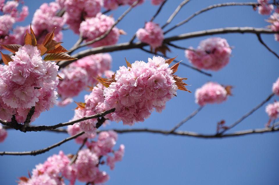 Nowruz: il Capodanno persiano che non dovresti perdere