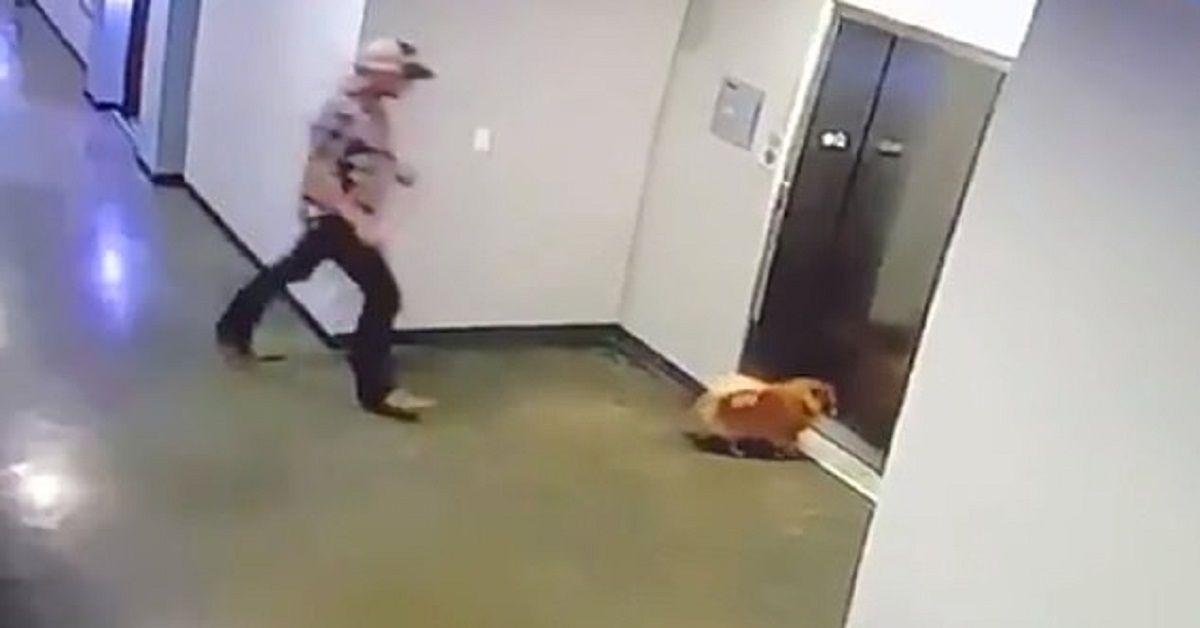 uomo-cane-ascensore