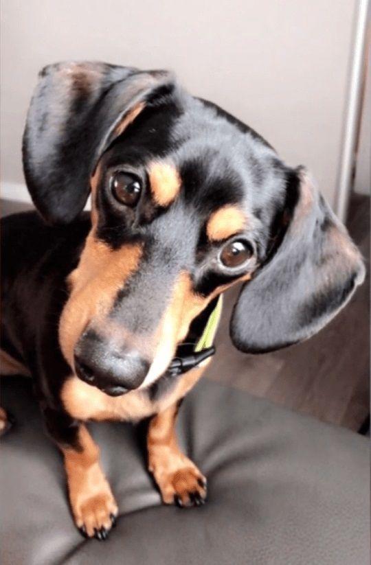 Ziggy, il cane che ha perso la vita per una telefonata fatta