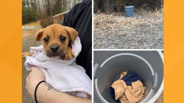 Trovata-cagnolina-abbandonata-in-un-secchio-della-spazzatura 2