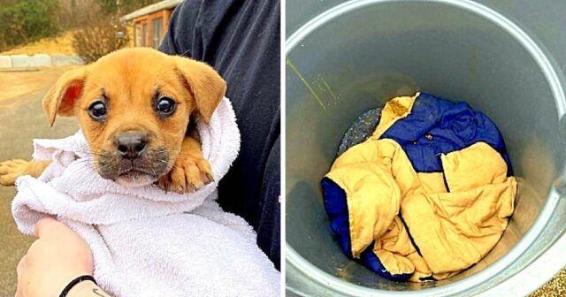 Trovata-cagnolina-abbandonata-in-un-secchio-della-spazzatura 1