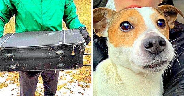 ragazzi-trovano-cane-abbandonato-in-una-valigia