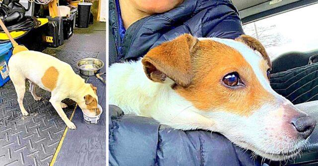 ragazzi-trovano-cane-abbandonato-in-una-valigia 1