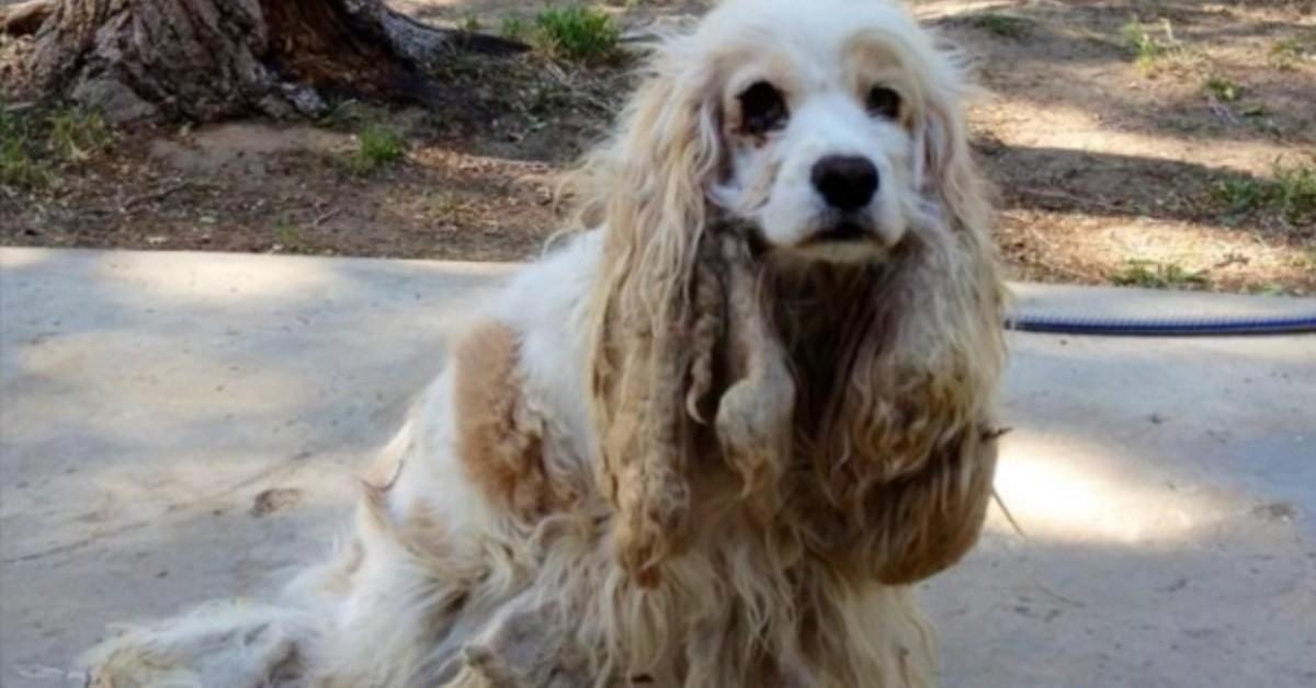 Cane trovato nel deserto subisce una trasformazione incredibile