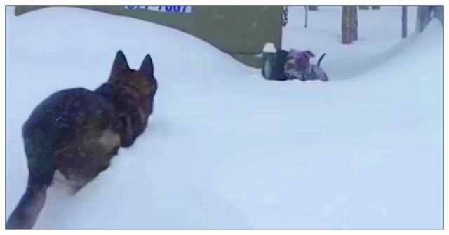 Knuckles-rimane-intrappolata-nella-neve-ma-Kanawha-agisce-in-fretta