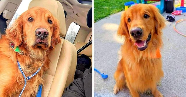 Red-il-cane-scappato-via-dopo-lincidente-viene-ritrovato-dopo-piu-di-una-settimana
