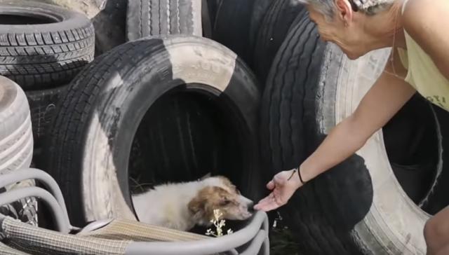 Cooper-il-cane-nascosto-nella-pila-di-pneumatici