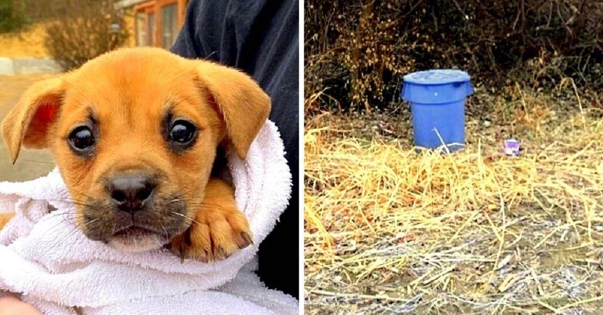 Trovata-cagnolina-abbandonata-in-un-secchio-della-spazzatura-la-polizia-sta-indagando