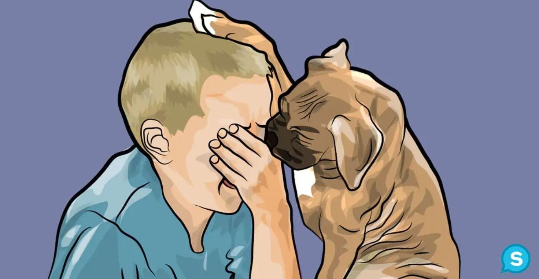 cane-conforta