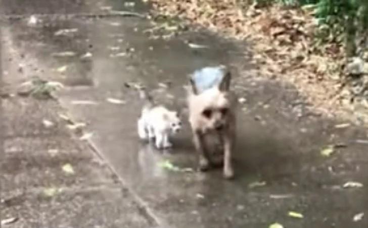Cane salva gattino abbandonato sotto la pioggia e lo porta a