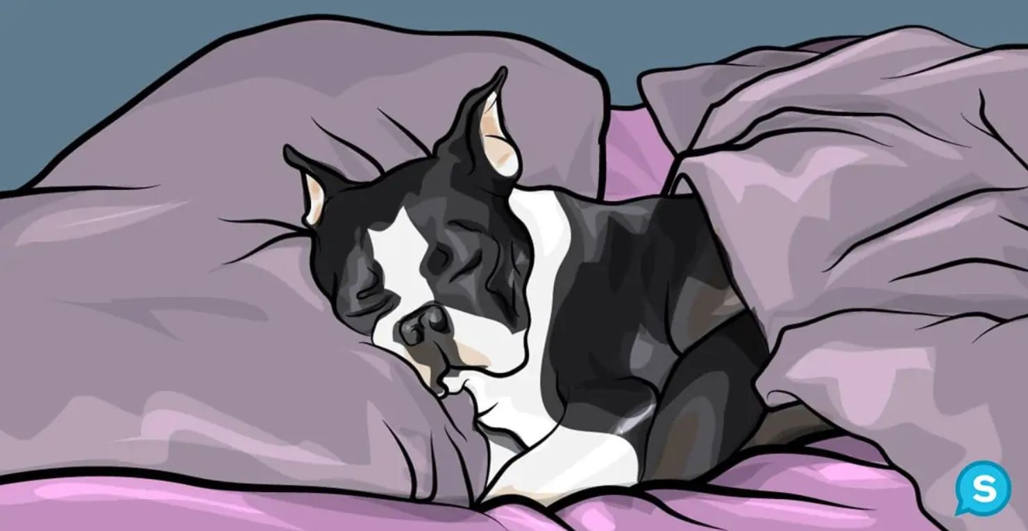 cane-letto
