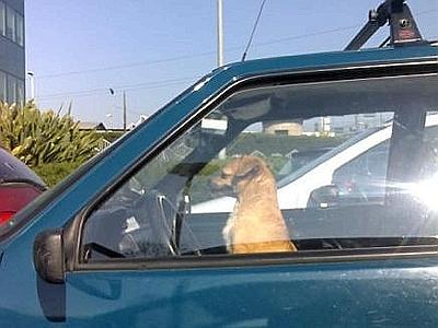 cane-macchina-solo