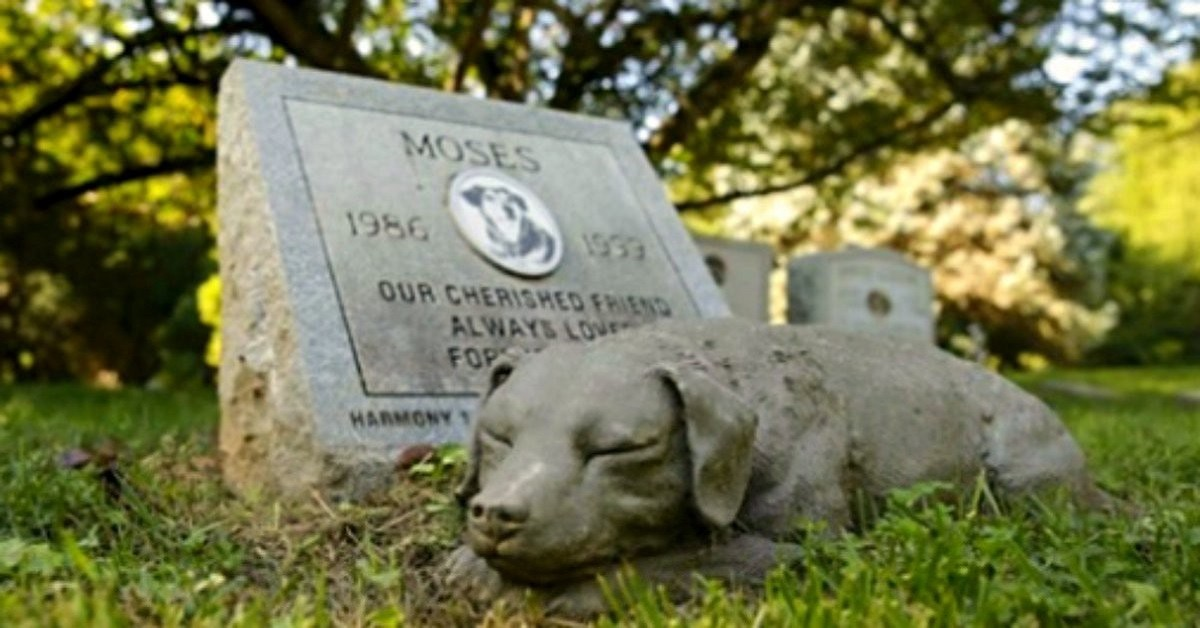 New York, nuova legge consente agli animali domestici di essere sepolti con gli umani al cimitero
