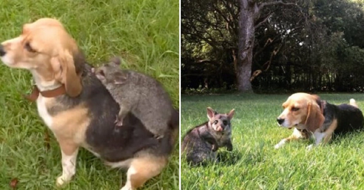 cane e opossum