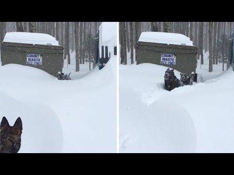 Knuckles-rimane-intrappolata-nella-neve 1