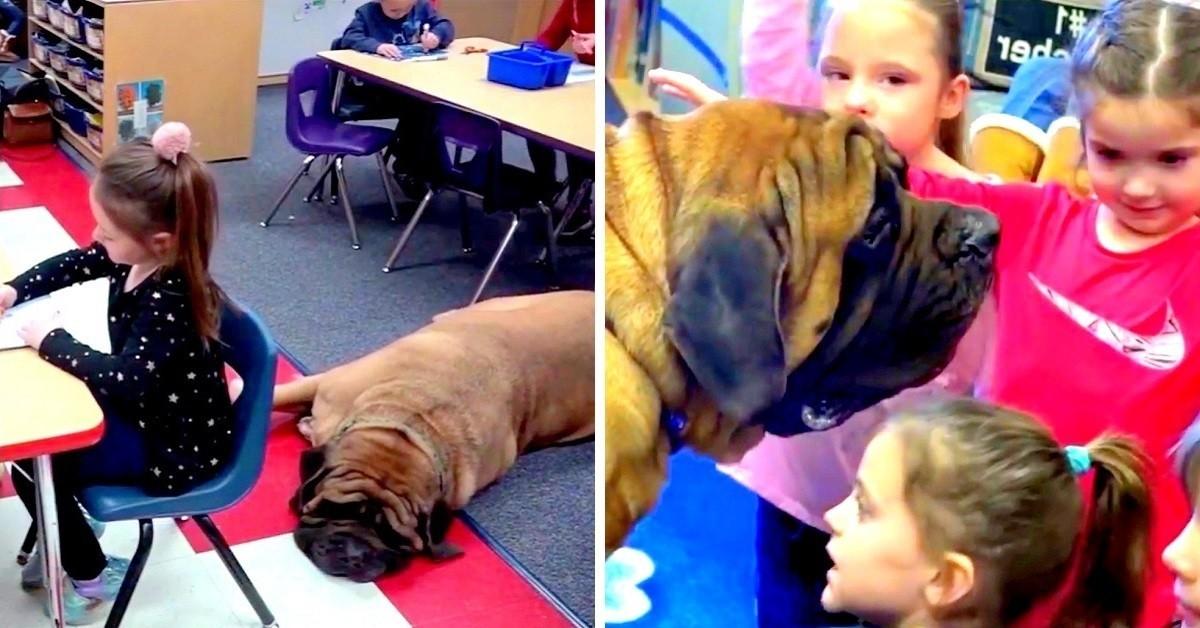 i-miglioramenti-dei-bambini-con-la-presenza-di-Gabriel-il-cane-da-terapia