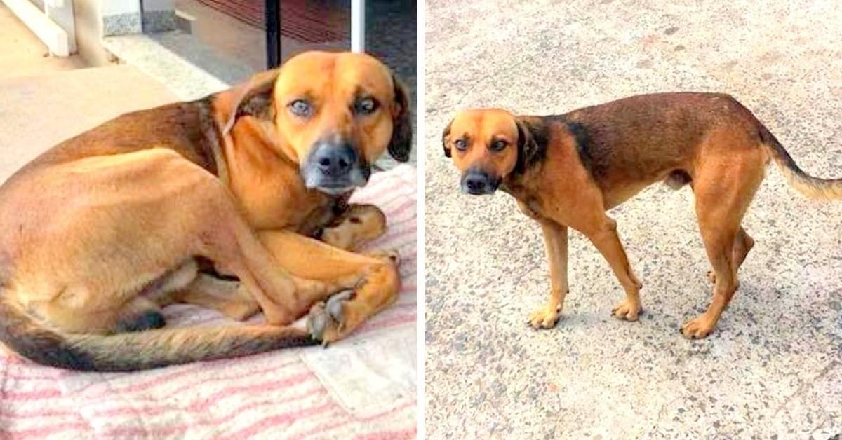 il-cane-che-ha-aspettato-il-suo-amico-umano-per-mesi-ha-trovato-una-nuova-casa