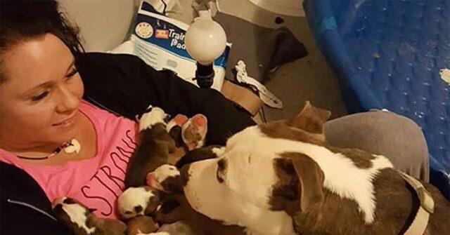 il-meraviglioso-gesto-della-piccola-Grayce-per-la-sua-mamma-umana-e-per-i-suoi-cuccioli