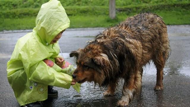 l'amore-di-Ken-per-gli-animali