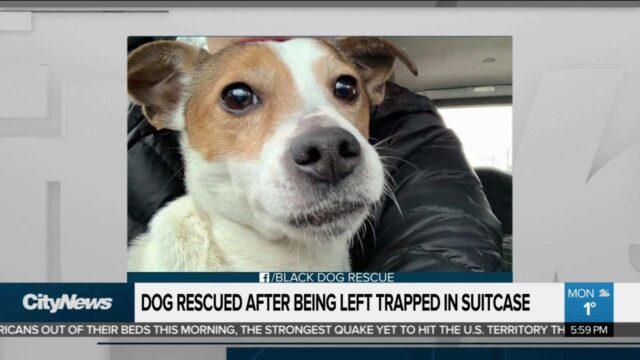 ragazzi-trovano-cane-abbandonato-in-una-valigia 2