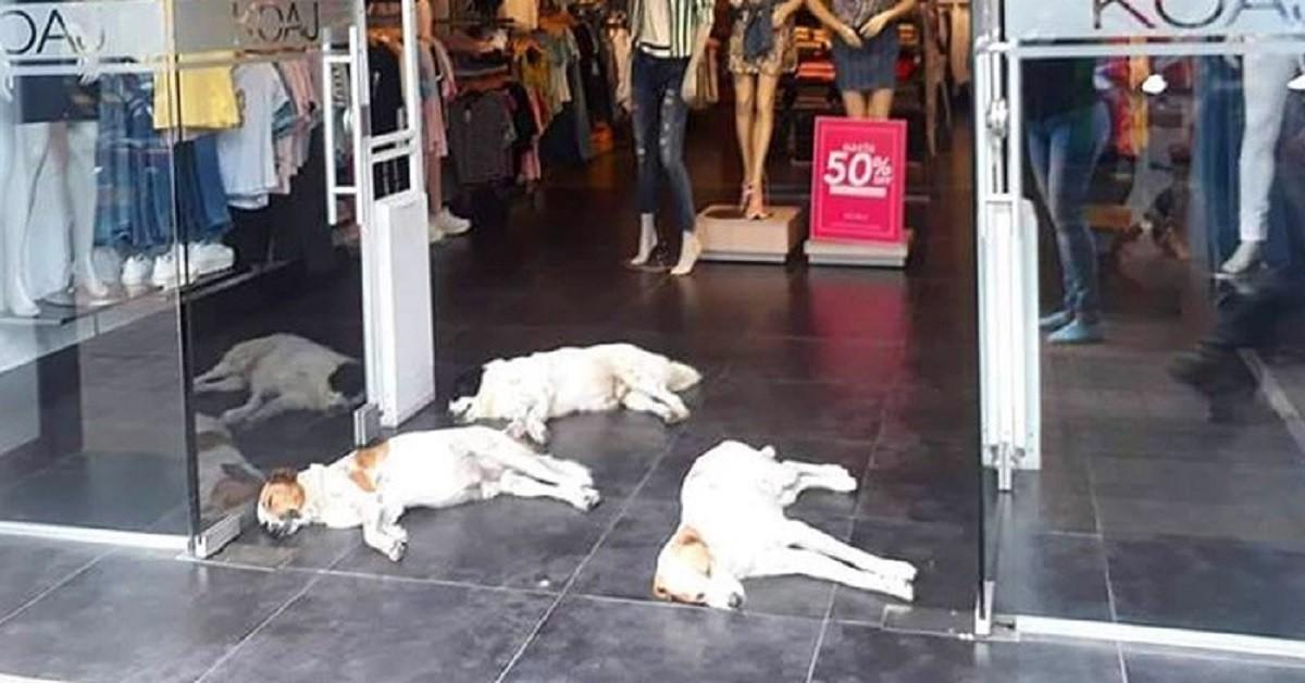 Colombia, negozio permette ai cani randagi di rinfrescarsi con l'aria condizionata